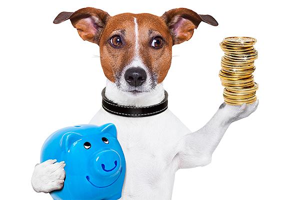 Qué nos puede enseñar sobre finanzas nuestro perro Banco Mediolanum
