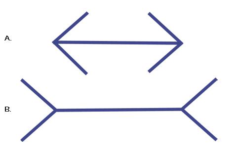 flechas-lineas-muller-lyer