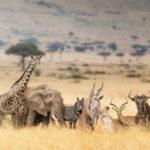 ¿Cuáles son los animales más ahorradores de la naturaleza?